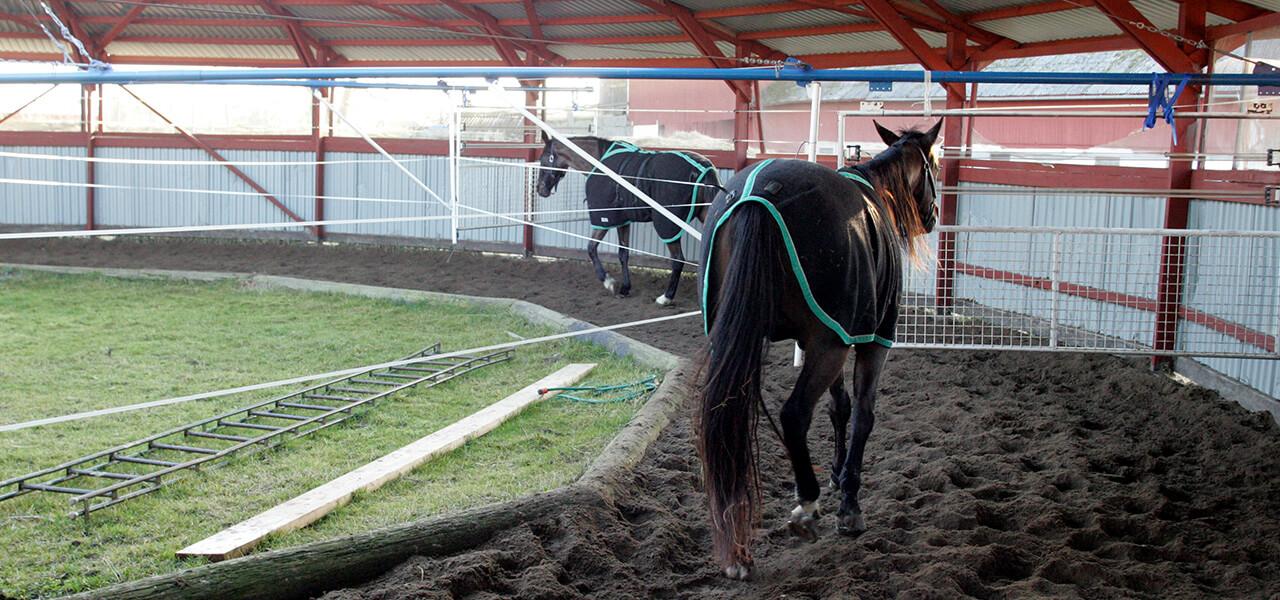 Mantorptravet - Att äga häst